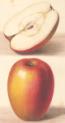Fructicultura