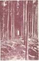 Boscos i silvicultura