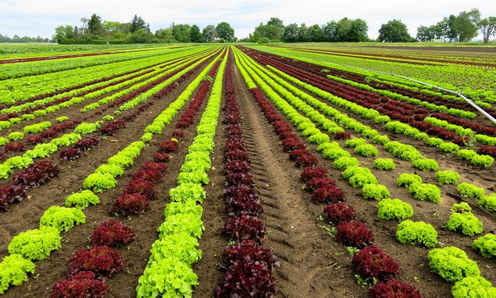 land-plants-green-vegetables-flowers-767-resized.jpg